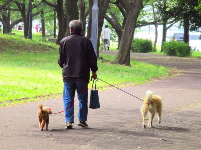 公園で2匹の愛犬を散歩させる男性