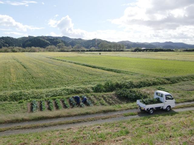 農地の脇道を走る軽トラック